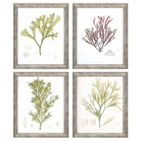 Paragon Seaweed III Framed Wall Art - Set of 4