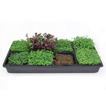 Hydroponic Sectional Microgreens Growing Kit - Grow Micro Greens & Herbs Indoor Gardening: All Supplies - Seeds, Trays, Instructions, Etc.…