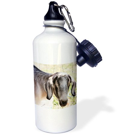 - 3dRose Farm Goat- Animals- Nature, Sports Water Bottle, 21oz