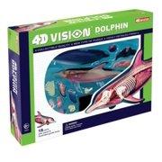 4D Dolphin Anatomy Model