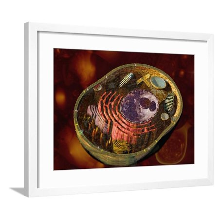 Biomedical Illustration of a Generalized Animal Cell Section Showing its Major Organelles Framed Print Wall Art By Carol & Mike