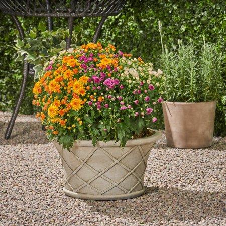 - Grace Garden Urn Planter Pot, Lipped Edge, Lattice Pattern, Antique White Lightweight Concrete