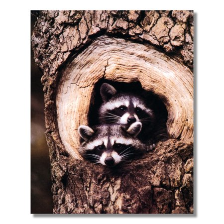 Baby Raccoons Stick Head Out Of Tree Hole #1 Photo Wall Picture 8x10 Art Print (Stick Picture)