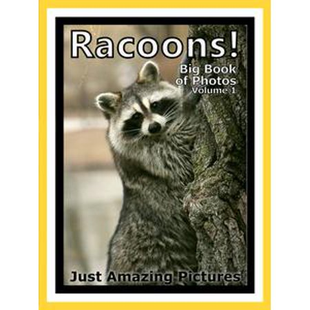 Just Racoon Photos! Big Book of Photographs & Pictures of Racoons Vol. 1 - eBook (Mario Racoon)