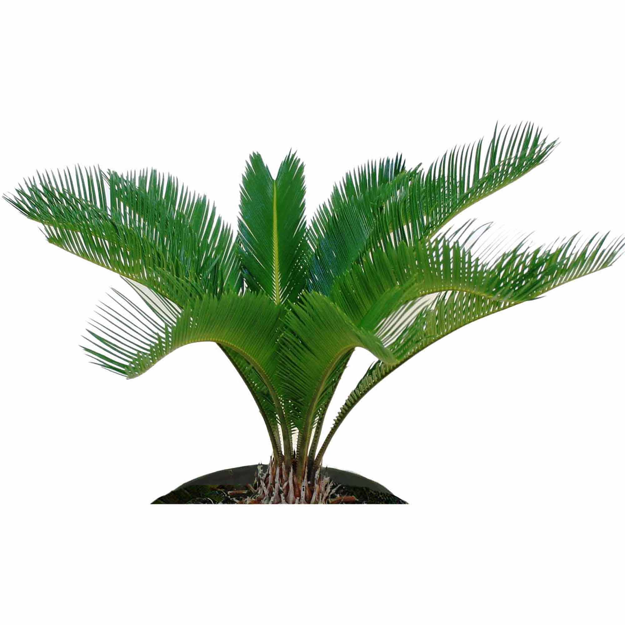 Outstanding areca palm cats pictures best inspiration for Areca palm safe for cats
