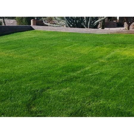 Linn Perennial Ryegrass Seed (Forage) - 5 Lbs.