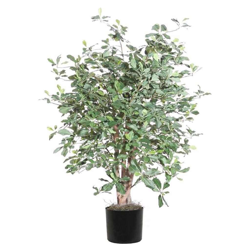 Vickerman 4 ft. Extra Full Black Olive Bush