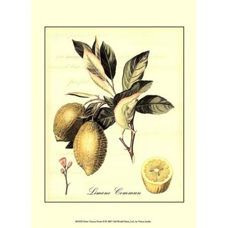 Petite Fruit (Petite Tuscan Fruits II Poster Print by Vision studio (10 x 13) )