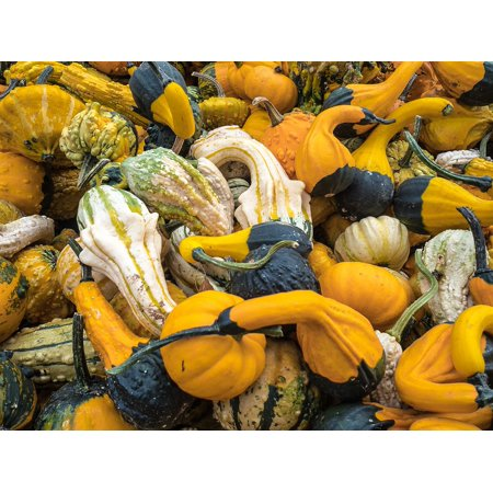 LAMINATED POSTER Autumn Decoration Autumn Pumpkin Halloween Gourd Poster Print 24 x 36