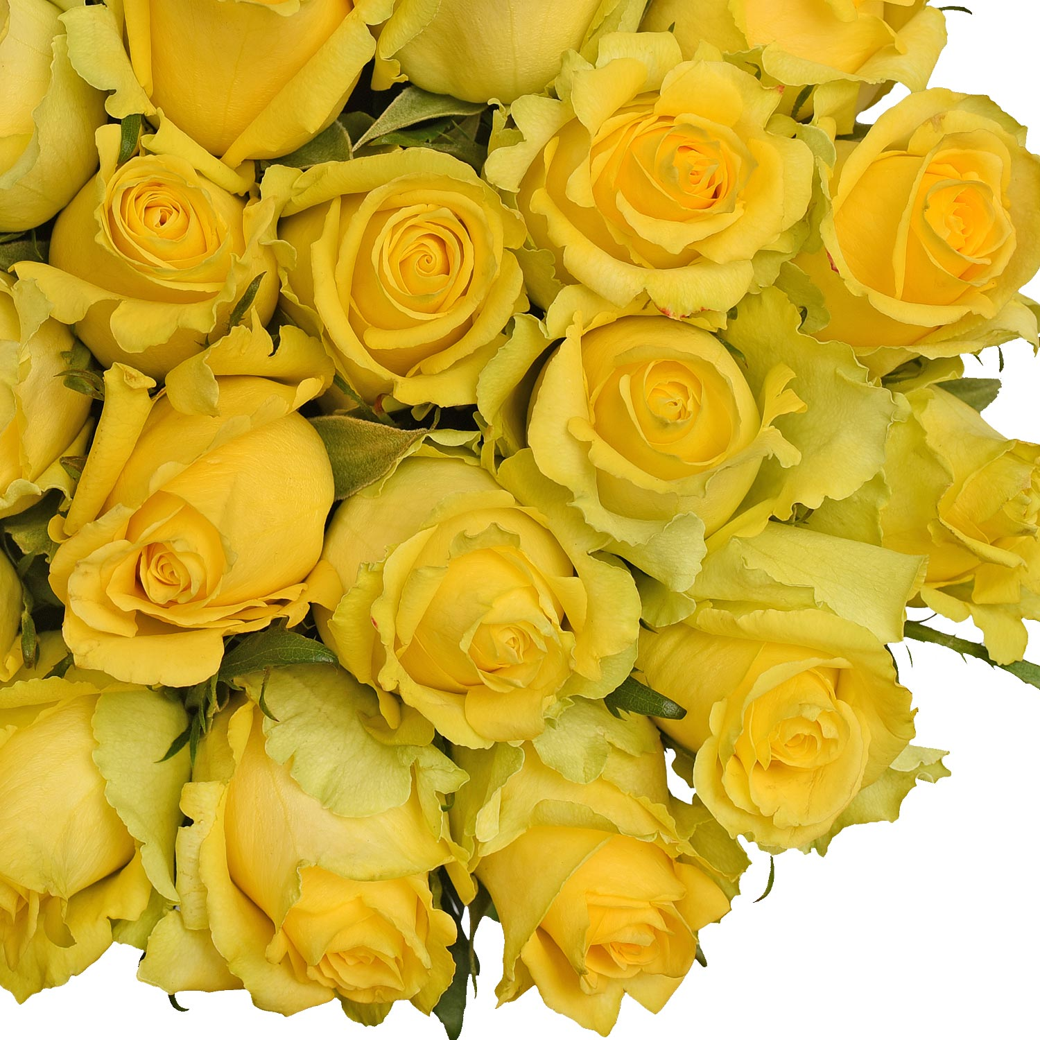 Natural Fresh Flowers Yellow Roses 20 100 Stems Walmart