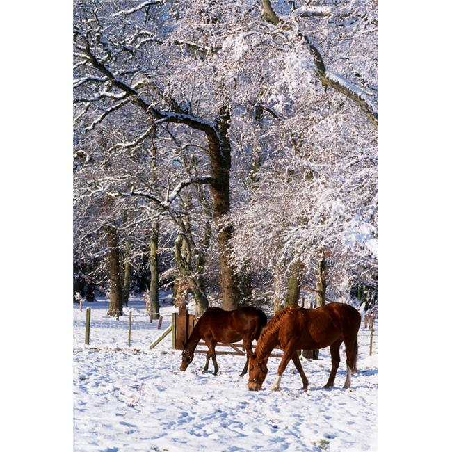 Posterazzi DPI1814345 Thoroughbred Horses Mares in Snow Ireland Poster Print by The Irish Image Collection, 12 x 18 - image 1 of 1