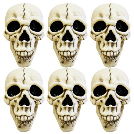 Set of 6 Spooky Decorative Skulls! Perfect for Your Next Halloween Gathering! - Halloween Gathering Chicago