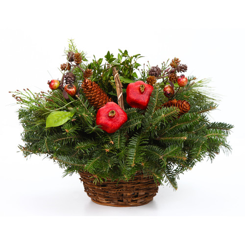Live Tabletop Christmas Trees Delivered