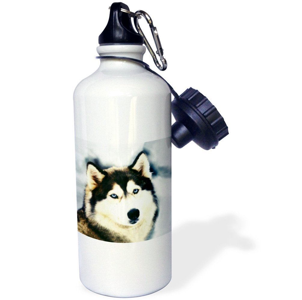 3dRose wb_517_1 Staring Siberian Husky Sports Water Bottl...