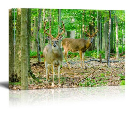 Canvas Prints Wall Art - Whitetail Deer Buck Standing in the Woods | Modern Wall Decor/Home Decor Gallery Wraps Giclee Print & Wood Framed. Ready to Hang - 16