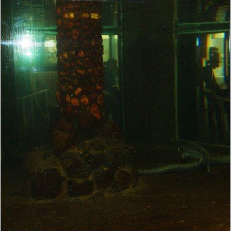 Eels at the w:Seaside Aquarium in Oregon. Poster Print 24 x 36