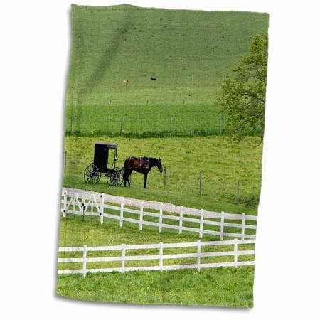 3dRose Amish farm with horse buggy near Berlin, Ohio - US36 DFR0009 - David R. Frazier - Towel, 15 by 22-inch