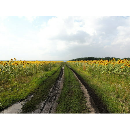 Sunflower Resin - Canvas Print After The Rain Sunflower Sunflowers Road Clouds Stretched Canvas 10 x 14