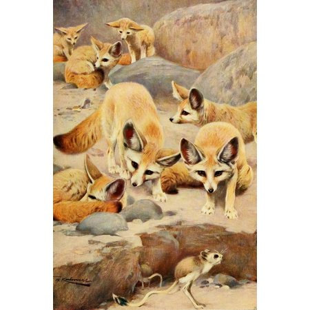 Wild Life Of The World 1916 Fennec Fox   Jerboa Poster Print By  Friedrich Wilhelm Kuhnert