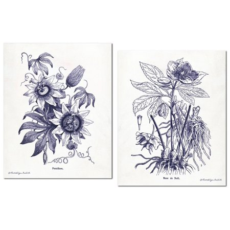 Lovely Old-Fashioned Indigo Plant Botanical Prints; Two 11x14in Paper Poster Prints (Old Botanical Prints)