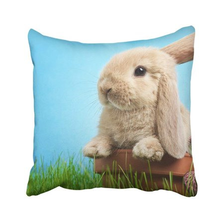 BPBOP Gray Bunny Baby Rabbit In Grass Green Cute Wildlife Animal Spring Young Charm Daisies Pillowcase Throw Pillow Cover Case 18x18 inches - Grass Photo Charm