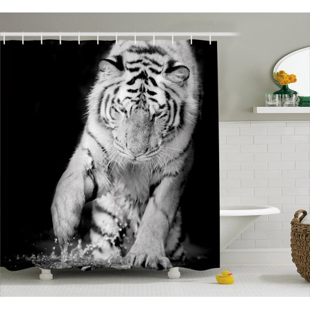 (Tiger Shower Curtain, Black and White Image of Large Cat Playing with Water Cool Animals Fun Hunter, Fabric Bathroom Set with Hooks, Black Pale Grey, by Ambesonne)