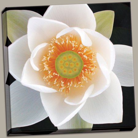 Lotus II Awesome Vintage Photo Lovely Cool Anemone Petal Retro Classy Daisy Canvas 12x12