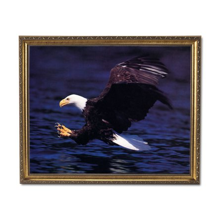 American Bald Eagle Claws Lake Animal Wildlife Wall Picture Gold Framed Art Print