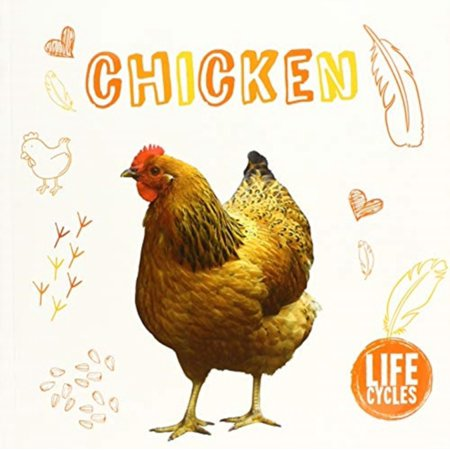 Life Cycle Of Chicken (CHICKEN)