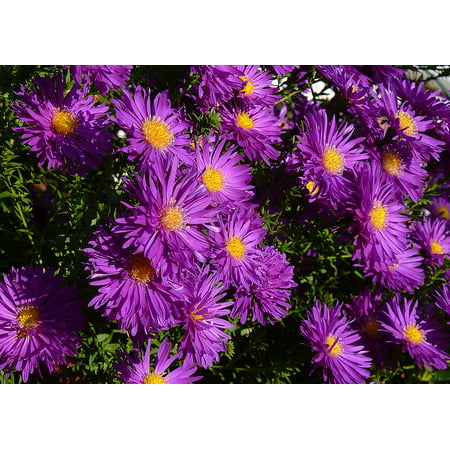 LAMINATED POSTER Bouquet Blue Flowers Balcony Bloom Asters Poster Print 24 x