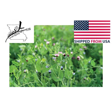 100 Austrian Winter Pea Seeds Peas Open Pollinated Cover Crop Forage Deer Food Plot 100 Seed By JL Missouri Parts thumbnail