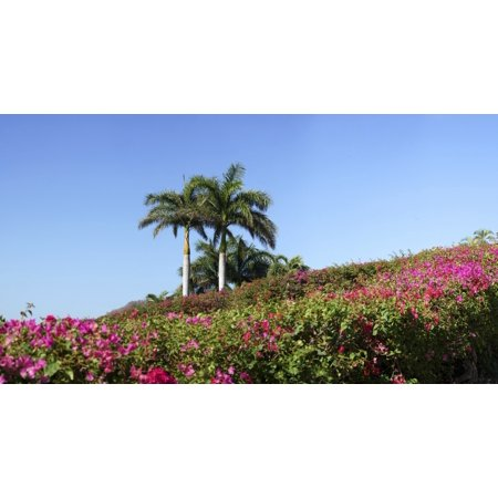 View of flowers in bloom with palm trees Liberia Guanacaste Costa Rica Poster Print