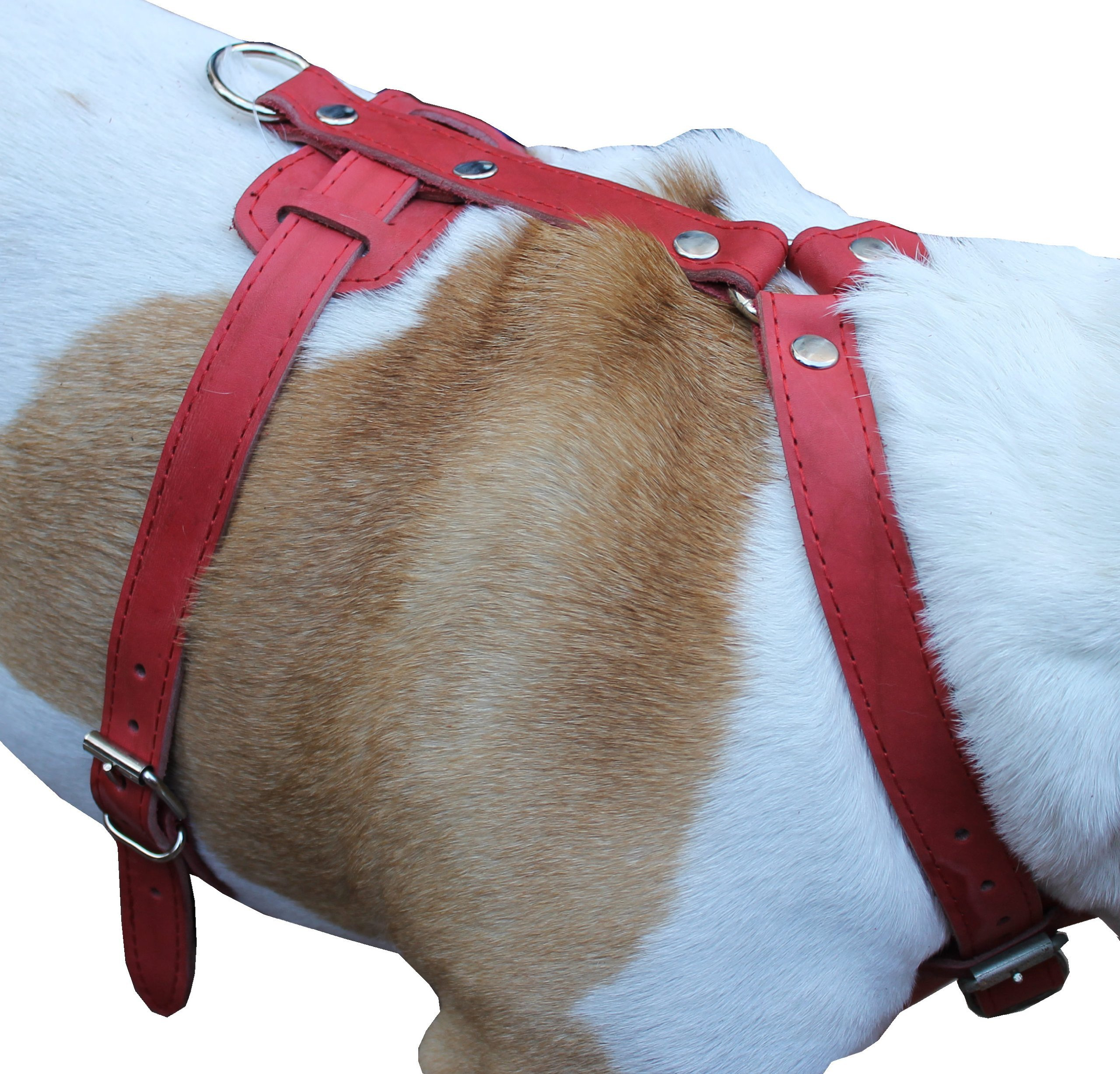 Genuine Leather Dog Harness 29;-37; Chest 1; Wide Straps ...