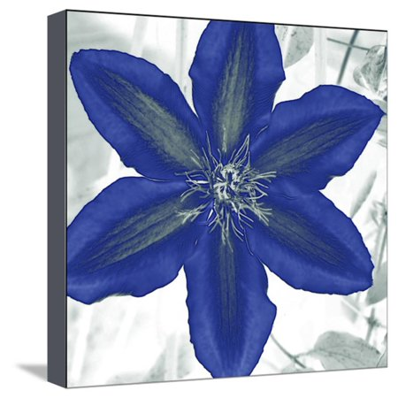 Indigo Star IV Stretched Canvas Print Wall Art By Sharon (Chandler Chandler Place)