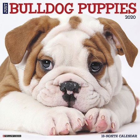 Willow Creek Press 2020 Just Bulldog Puppies Wall Calendar Puppies Wall Calendar