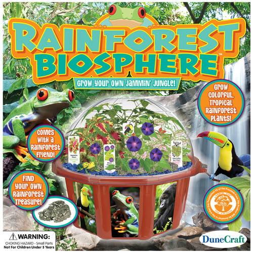 Dome Terrarium: Rainforest Biosphere