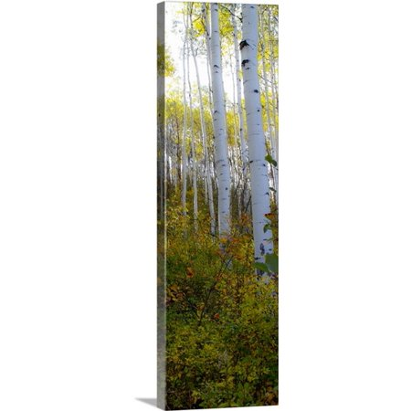 Great Big Canvas Kathy Mansfield Premium Thick Wrap Canvas Entitled Aspen In The Day Ii