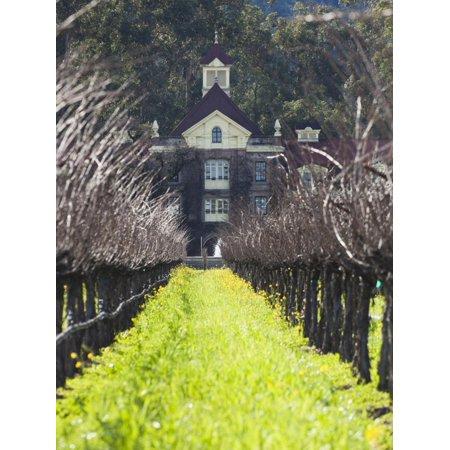 Vineyard in Winter, Rubicon Estate Vineyard, Rutherford, Napa Valley Wine Country, California, Usa Print Wall Art By Walter Bibikow