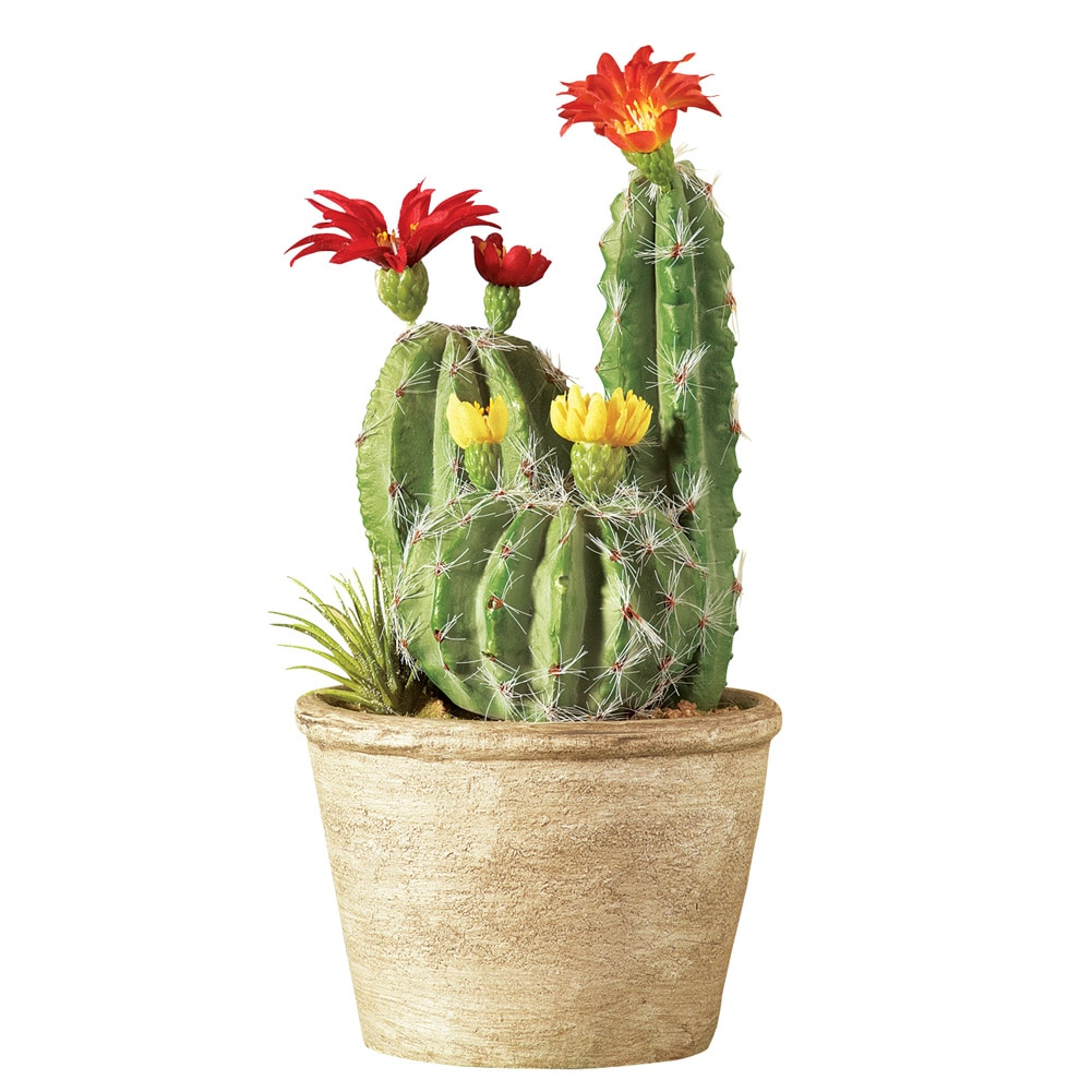Faux Flowering Cactus In Pot, Red