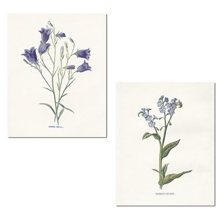 Lovely Old-Fashioned Botanical Hare-Bell and Forget Me Not Set by Gwendolyn Babbitt; Floral Decor; Two 11x14in Poster Prints (Old Botanical Prints)