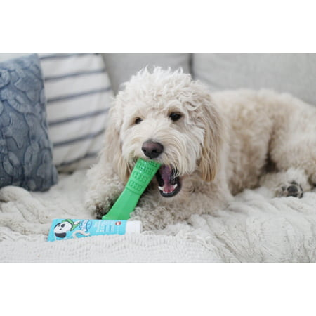 Bristly Brushing Stick Dog Toothbrush - Best Dog Chew Toy and Dental Chew (Best Chew Toys For Chihuahuas)