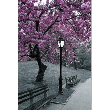 New York Central Park Blossom Photograph Poster - 24x36 - Halloween Event Central Park