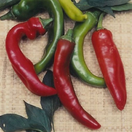 Anaheim Chili Hot Pepper Garden Seeds - 1 Lbs - Non-GMO, Heirloom Vegetable Gardening Seeds (Hot Chili Pepper Seeds)