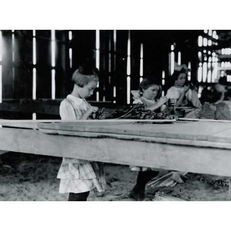 Interior of tobacco shed Hawthorn Farm Girls in foreground are 8 9 and 10 years old The 10 yr old makes 50 cents a day 12 workers on this farm are 8 to 14 years old and about 15 are over 15 yrs