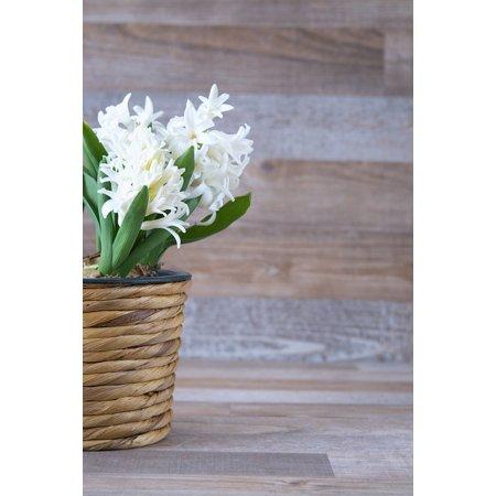 LAMINATED POSTER Flowers White Hyacinth Fragrant Flower Flower Poster Print 24 x 36