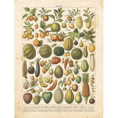 Classic Vintage Ephemera Style French Fruit Chart Print; One 12x18in Paper Poster