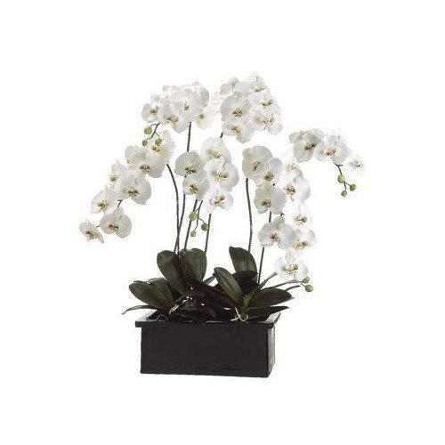 Tori Home Phalaenopsis Orchid Plant in Ceramic Pot