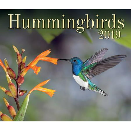 Hummingbirds 2019 (Other)