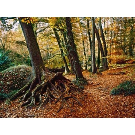 Trees with granite rock at Huelgoat forest in autumn Finistere Brittany France Stretched Canvas - Panoramic Images (36 x 28) 28 Inch Square Granite Top
