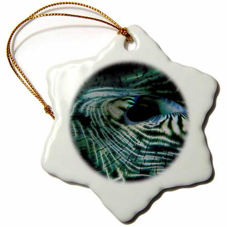 3dRose Micronesia, Giant clam mantle marine life - NA02 SWS0070 - Stuart Westmorland - Snowflake Ornament, 3-inch ()